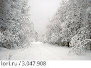 Заснеженные деревья. Стоковое фото, фотограф Трошина Елена / Фотобанк Лори