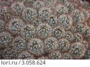 Абстрактный фон из кактусов. Стоковое фото, фотограф Евгения Джумок / Фотобанк Лори