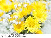 Купить «Букет с желтыми хризантемами», фото № 3060452, снято 11 декабря 2011 г. (c) Дмитрий Брусков / Фотобанк Лори