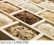Купить «Деревянные лотки с рисом разных сортов», фото № 3066036, снято 15 августа 2007 г. (c) Monkey Business Images / Фотобанк Лори