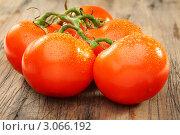 Купить «Спелые томаты с каплями воды. Фокус на ветке», фото № 3066192, снято 18 декабря 2011 г. (c) Марина Сапрунова / Фотобанк Лори