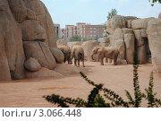 Биопарк в Валенсии. Африканские слоны. Стоковое фото, фотограф Татьяна Королева / Фотобанк Лори