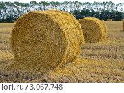 Валки соломы на скошенном поле. Стоковое фото, фотограф Руслан Хайруллин / Фотобанк Лори