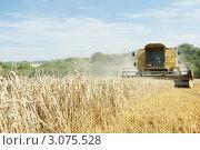 Купить «Желтый комбайн убирает хлеб», фото № 3075528, снято 8 августа 2006 г. (c) Monkey Business Images / Фотобанк Лори