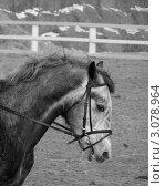 Лошадь. Стоковое фото, фотограф Ворошилова Анна / Фотобанк Лори
