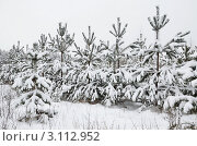 Купить «Молодые сосны занесённые снегом», эксклюзивное фото № 3112952, снято 22 декабря 2011 г. (c) Елена Коромыслова / Фотобанк Лори