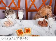 Купить «Банкет для животных», фото № 3119416, снято 31 декабря 2011 г. (c) Okssi / Фотобанк Лори