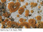 Желтый лишайник на камне. Стоковое фото, фотограф Юрий Кузовлев / Фотобанк Лори