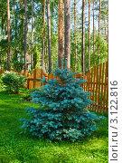 Купить «Голубая ель на дачном участке», фото № 3122816, снято 2 июля 2011 г. (c) Юлия Бабкина / Фотобанк Лори