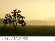 Туманный рассвет. Стоковое фото, фотограф Ольга Чудина / Фотобанк Лори