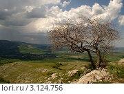 Одинокое дерево в горах. Стоковое фото, фотограф Ольга Чудина / Фотобанк Лори