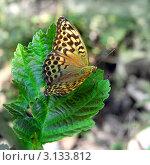 Бабочка на зеленом листе. Стоковое фото, фотограф Виниченко Ирина Николаевна / Фотобанк Лори