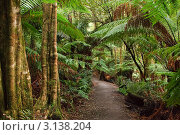 Купить «Тропический лес, Австралия», фото № 3138204, снято 19 июня 2008 г. (c) Sergey Borisov / Фотобанк Лори