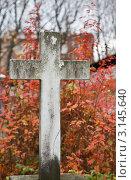 Могильный крест на Донском кладбище в Москве. Стоковое фото, фотограф Наталия Китаева / Фотобанк Лори