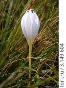 Белый цветок. Стоковое фото, фотограф Башарин Алексей / Фотобанк Лори