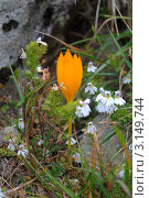 Желтый цветок. Стоковое фото, фотограф Башарин Алексей / Фотобанк Лори