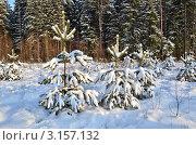 Купить «Зимний пейзаж с молодыми соснами», эксклюзивное фото № 3157132, снято 18 января 2012 г. (c) Елена Коромыслова / Фотобанк Лори