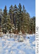 Купить «Зимний лес», эксклюзивное фото № 3157140, снято 18 января 2012 г. (c) Елена Коромыслова / Фотобанк Лори