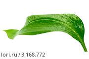 Купить «Зеленый лист с каплями воды», фото № 3168772, снято 21 апреля 2010 г. (c) vlntn / Фотобанк Лори