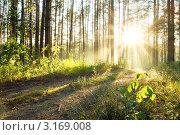 Купить «Рассвет в лесу», фото № 3169008, снято 21 июня 2011 г. (c) vlntn / Фотобанк Лори