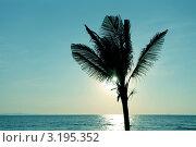 Пальма на пляже в Таиланде (2011 год). Стоковое фото, фотограф Диана Карлова / Фотобанк Лори