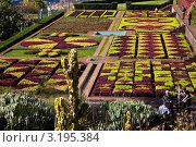 Купить «Цветочные орнаменты в ботаническом саду Мадейры (Jardim Botanica da Madeira)», фото № 3195384, снято 23 декабря 2011 г. (c) Виктория Катьянова / Фотобанк Лори