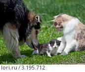 Собака вылизывает котенка. Стоковое фото, фотограф Нина Ефремова / Фотобанк Лори