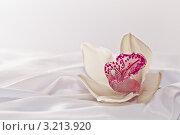 Купить «Цветок орхидеи на белом шёлке», фото № 3213920, снято 15 ноября 2011 г. (c) Инга Дудкина / Фотобанк Лори