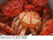 Красные крабы с икрой. Стоковое фото, фотограф Виктория Кучугурова / Фотобанк Лори