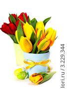 Купить «Два букета красных и желтых тюльпанов в горшках и пасхальные яйца на белом фоне», фото № 3229344, снято 20 января 2012 г. (c) Наталия Кленова / Фотобанк Лори