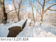 Купить «Большая труба, проходящая среди зимнего леса», эксклюзивное фото № 3231824, снято 3 февраля 2012 г. (c) Игорь Низов / Фотобанк Лори