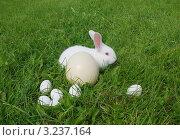 Кролик и яйца в траве. Стоковое фото, фотограф GPeshkova / Фотобанк Лори