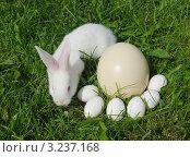 Белый кролик и яйца на газоне. Стоковое фото, фотограф GPeshkova / Фотобанк Лори