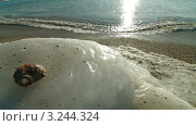 Зимний морской пейзаж. Стоковое видео, видеограф Владимир Никулин / Фотобанк Лори