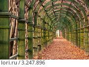 Купить «Аллея в парке Архангельское», фото № 3247896, снято 11 октября 2010 г. (c) Glen_Cook / Фотобанк Лори