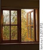 Купить «Вид из окна на осеннее дерево», фото № 3257972, снято 27 октября 2011 г. (c) Татьяна Кахилл / Фотобанк Лори