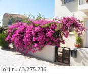 Изгородь из цветов. Стоковое фото, фотограф Валерий Якушев / Фотобанк Лори