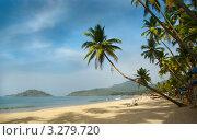 Кокосовые пальмы на тропическом пляже Палолем. Штат Гоа, Индия. Стоковое фото, фотограф Валентин Шевченко / Фотобанк Лори