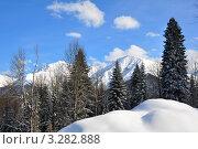 Купить «Красивый горный пейзаж с высокими пихтами в окрестностях города Сочи», фото № 3282888, снято 17 февраля 2012 г. (c) Анна Мартынова / Фотобанк Лори