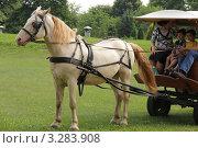 Купить «Лошадь изабелловой масти», фото № 3283908, снято 20 июля 2011 г. (c) Устинова Мария / Фотобанк Лори