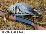 Купить «Охотничий трофей, белолобый гусь», фото № 3284328, снято 3 октября 2010 г. (c) макаров виктор / Фотобанк Лори