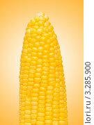 Купить «Початок кукурузы», фото № 3285900, снято 13 июля 2008 г. (c) Elnur / Фотобанк Лори
