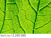 Зеленый лист фактура. Стоковое фото, фотограф Olsi / Фотобанк Лори