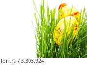 Купить «Пасхальные яйца в траве на белом фоне», фото № 3303924, снято 18 февраля 2012 г. (c) Наталия Кленова / Фотобанк Лори