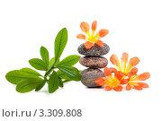 Красивый цветок на пирамиде СПА камней. Стоковое фото, фотограф Константин Сидоров / Фотобанк Лори