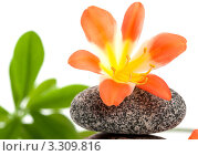 Красивый цветок на камне для СПА процедур на белом фоне. Стоковое фото, фотограф Константин Сидоров / Фотобанк Лори
