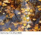 Опавшие листья клёна в воде. Стоковое фото, фотограф Полухин Сергей / Фотобанк Лори