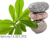 Пирамида из камней для СПА с растением на белом фоне. Стоковое фото, фотограф Константин Сидоров / Фотобанк Лори