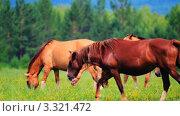 Купить «Лошади гуляют по полю», видеоролик № 3321472, снято 4 марта 2012 г. (c) Евгений / Фотобанк Лори
