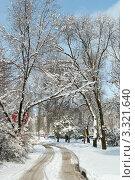 Купить «Дорога в снегу», фото № 3321640, снято 29 февраля 2012 г. (c) Королевский Василий Федорович / Фотобанк Лори